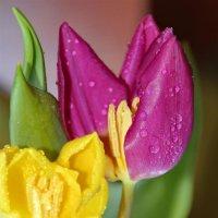 И сбудутся Весны желания! :: Татьянка *