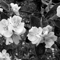 омытые весною :: Регина Смиян