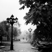 черно белая осень :: сергей швед