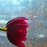 два таких разных цветка. :: Elenn S