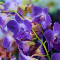 Как прекрасны орхидеи :: Наталья Лакомова