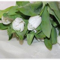 Белые тюльпаны, блик Луны туманный.... :: Tatiana Markova