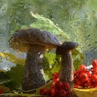 Грибная осень :: Наталья Калинина