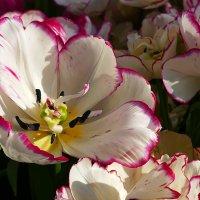 Весенние цветы. :: Иван