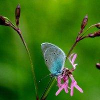 опять про бабочек 4 :: Александр Прокудин