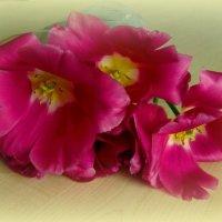 Тюльпаны марта :: Сергей Карачин