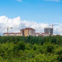 Лосиный остров :: Владимир Лазарев