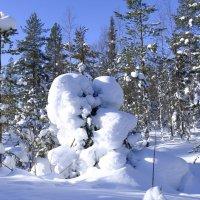 морозная обнимка двух деревьев :: Георгий