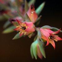 Цветок каменной розы :: Lеsя Sеmейкинa