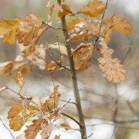 Запоздалые листья :: Борис Руненко