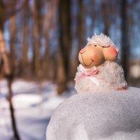 барашка встречает весну :: Денис Антонов