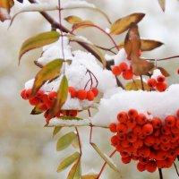 первый снег :: Miracle M M