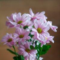 Цветы. :: Виктор Шпаков