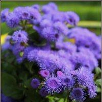 В мире цветов так тепло и прохладно.. :: Татьянка *
