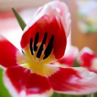 весна :: МАРИНА шишкина