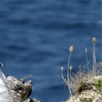 Чайка :: Ольга Беляева