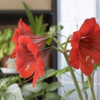 Весна на лоджии. :: Виктор Орехов