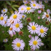 Осенние цветы :: lady v.ekaterina