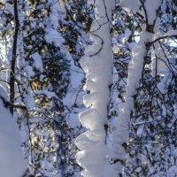 """зубчатый"" снег на дереве :: Георгий"