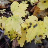 Кружевная листва :: lady v.ekaterina