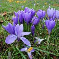 Удивительный сон приснился нежным цветам... Весна! Конец зиме... :: Galina Dzubina
