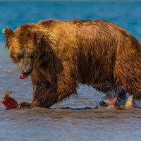 Рыбы много не бывает!!! :: Денис Будьков