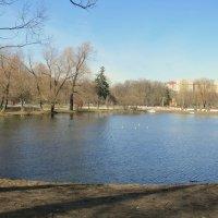 Пруд :: Валентина Жукова