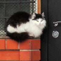 Кошка у окошка :: Алла Захарова