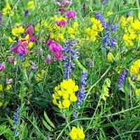 Полевые цветы :: Владимир