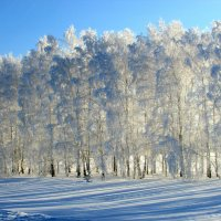 Зимние кружева :: Светлана