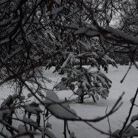 снежные кружева :: Галина R...
