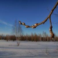 Весна где-то рядом :: Сергей Шаталов