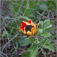 Весеннее цветение :: Lmark