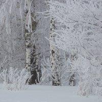 Зимняя сказка :: Наталья Ильина