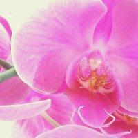 Таинство цветка :: Ольга Голубева