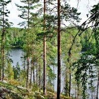 Национальный парк «Реповеси». Озеро Капиавеси :: Елена Павлова (Смолова)