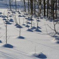 Зимний ландшафт :: Александр Сивкин