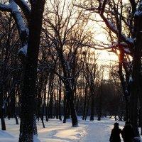 красивая зима :: Sergey Yarilin
