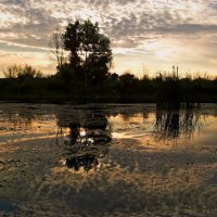 Кто эту красоту понять сумеет, тому природы дорога любовь... :: Лидия Бараблина
