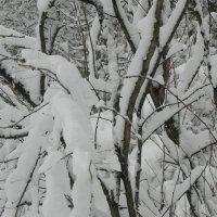 Зимний лес! :: Aleksandr
