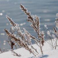 Зарисовка зимы :: Анатолий Соляненко