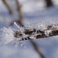 Зимнее утро :: Lersa