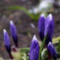 О весне... :: Ольга