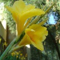 Городские цветы :: марина ковшова