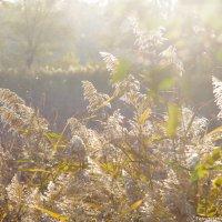 шумел камыш - светило солнце :: Ксения смирнова