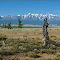 Курайская степь и Северо-Чуйский хребет :: Валерий Михмель