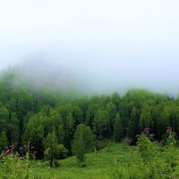 Туман наседает :: Сергей Чиняев