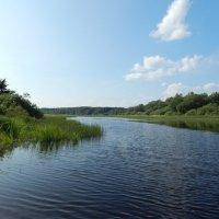Река Кересть :: Светлана Z.