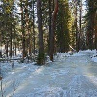 Лес в марте. :: Наталья