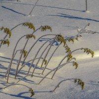 Зимняя картинка :: Сергей Цветков